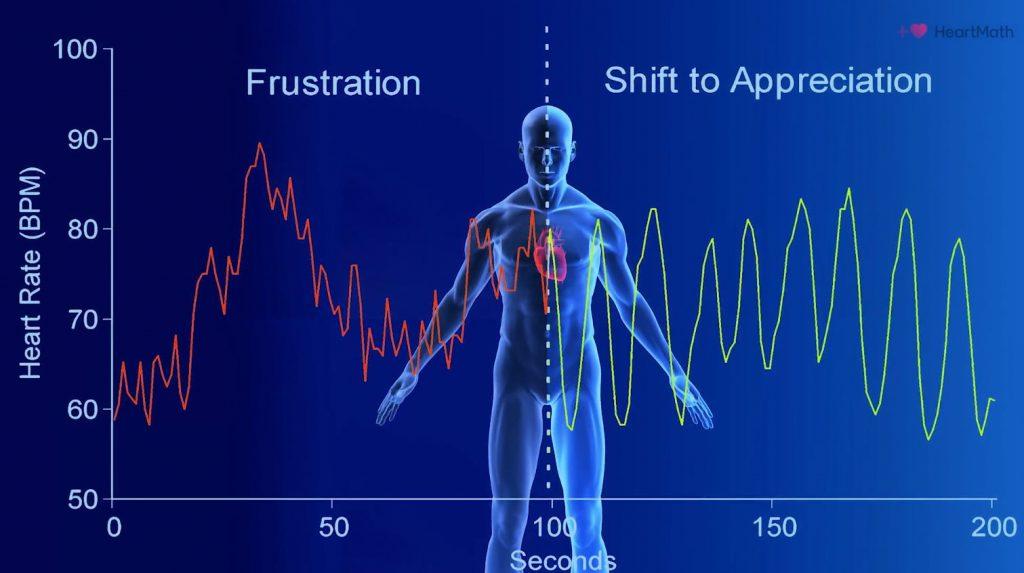 Grafische hartcoherentie weergave van ons hartritme patroon.