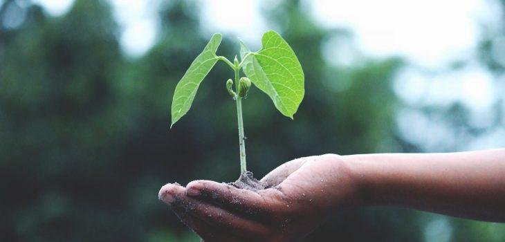 Persoonlijke groei. Foto door Akil Mazumder