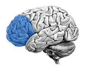 Gedragsverandering zal plaats vinden via de prefrontale cortex, een gebied aan de voorkant van onze hersenen.
