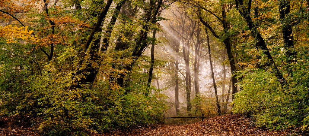 Buiten wandelen is niet alleen gezond, want wanneer je in de natuur bent stimuleert dat ook om los te komen van je privé- of werkomgeving. West-Brabant heeft enkele prachtige wandelgebieden voor wandelcoaching.